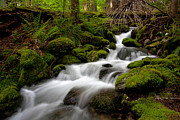Moss Green Prints - Lush Stream Print by Mike Reid