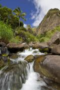 Jenna Prints - Lush Tropical Iao River Valley Print by Jenna Szerlag