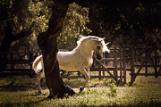 White Unicorn Photos - Luso Unicorn by Silvia Foco