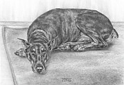 Kelly Acrylic Prints - Lying Low - Doberman Pinscher Dog Art Print Acrylic Print by Kelli Swan