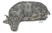 Pinscher Drawings Posters - Lying Low - Doberman Pinscher Dog Print color tinted Poster by Kelli Swan