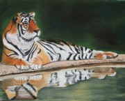Jungle Pastels Prints - Lying Tiger Print by Michele Turney