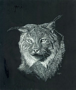 Seattle Drawings - Lynx by Don Winsor