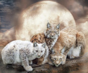 Animal Art Print Mixed Media Posters - Lynx Moon Poster by Carol Cavalaris