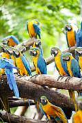 Macaw Print by Anek Suwannaphoom