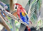 Tropical Wildlife Paintings - Macaw by Arline Wagner