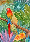 Jungle Paintings - Macaw by Jennifer Baird