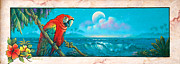 Tropical Paintings - Macaw by Keith Stillwagon