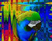 Tropical Birds Art - Macaw Madess by Amanda Vouglas