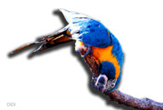 Blue And Yellow Macaw Prints - Macaw On A Stick Print by DiDi Higginbotham