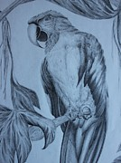 Macaw Drawings - Macaw Totem by Carol Frances Arthur