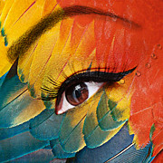 Fashion Face Digital Art Posters - Macaw Poster by Yosi Cupano