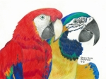 Husband Drawings Posters - Macaws In Living Color Poster by Sharon Blanchard