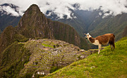 Inca Framed Prints - Machu Picchu, Huayna Picchu And Llama Framed Print by Michael S. Lewis