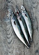 Mackerel Posters - Mackerel Poster by Carlo A