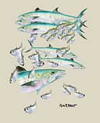 Mackerel Montage Print by Kevin Brant
