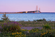 Mackinac Bridge Prints - Mackinac Bridge Print by Tanya Harrison