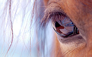 Brown Horse Prints - Macro Of Horse Eye Print by Anne Louise MacDonald of Hug a Horse Farm