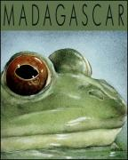 Frog Mixed Media Posters - Madagascar... Poster by Will Bullas