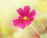Pink Flower Prints Metal Prints - Mademoiselle Metal Print by Amy Tyler