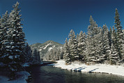 Fir Trees Photos - Madison River, Gallatin National by Raymond Gehman