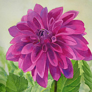 Flower Painting Metal Prints - Magenta Dahlia Metal Print by Sharon Freeman