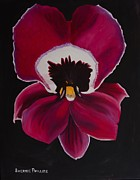 Black Background Painting Framed Prints - Magenta Orchid Black Background Framed Print by Sherrie Phillips