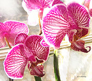 Orchids Digital Art Prints - Magenta Orchids Print by Jane Schnetlage