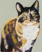 Calico Framed Prints - Maggie Mae Framed Print by Pat Saunders-White