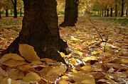 Autumn Colours Photos - Magic Autumn  by Bruno Santoro