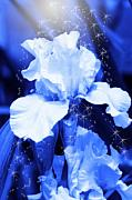 Cathy Beharriell Digital Art - Magic Blue Iris  by Cathy  Beharriell