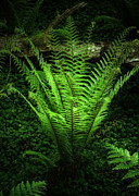 Ghostly Metal Prints - Magic Fern Metal Print by Svetlana Sewell