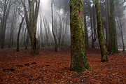 Woods Photo Metal Prints - Magic light Metal Print by Jorge Maia