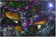 Purple Mushroom Framed Prints - Magic Mushrooms Framed Print by Barbara S Nickerson