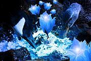 Cathy  Beharriell - Magic Water Flowers