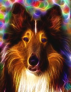 Collie Digital Art Metal Prints - Magical Collie Metal Print by Paul Van Scott