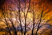 Sunset Greeting Cards Prints - Magical Colorful Sunset Tree Silhouette Print by James Bo Insogna