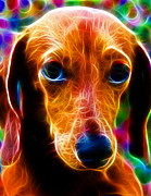 Dachshund Puppy Digital Art Posters - Magical Dachshund Poster by Paul Van Scott