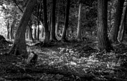 Door County Prints - Magical Forest Print by Scott Norris