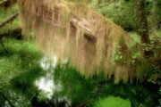 Unusual Photo Originals - Magical Hall of Mosses - Hoh Rain Forest Olympic National Park WA USA by Christine Till