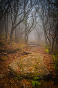 Eery Posters - Magical Path Poster by Joye Ardyn Durham