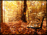 Autumn In The Country Posters - Magical Sunbeams on the Best Seat in the Forest Poster by Chantal PhotoPix