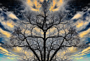Cloudscape Digital Art - Magical Tree by Hakon Soreide