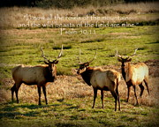 Wildlife Christian Art Posters - Magnificent Bull Elk Psalm 50 Poster by Cindy Wright