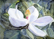 Barry Jones Metal Prints - Magnolia Blossom Metal Print by Barry Jones