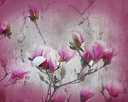 Dark Pink Posters - Magnolia Blossoms With Tinted Edge Poster by Andee Photography