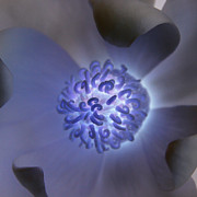 Carolyn Stagger Cokley - magnolia glow