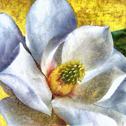 Contemporary Oil Paintings - Magnolia I by Jai Johnson
