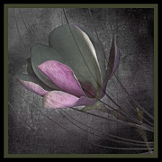 Marsha Tudor - Magnolia on Gray I
