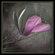 Marsha Tudor - Magnolia on Gray III